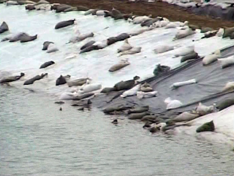 pierre levee plastic deteriorate missouri river flooding