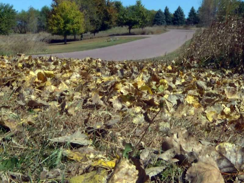 precip fall october weather leaves dry