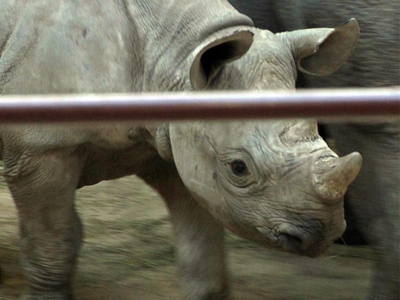 rhinosaurus sioux falls great plains zoo animals