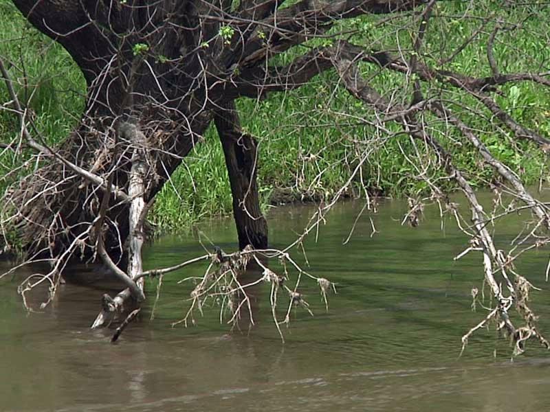 river levels full lots of rain flooding potential