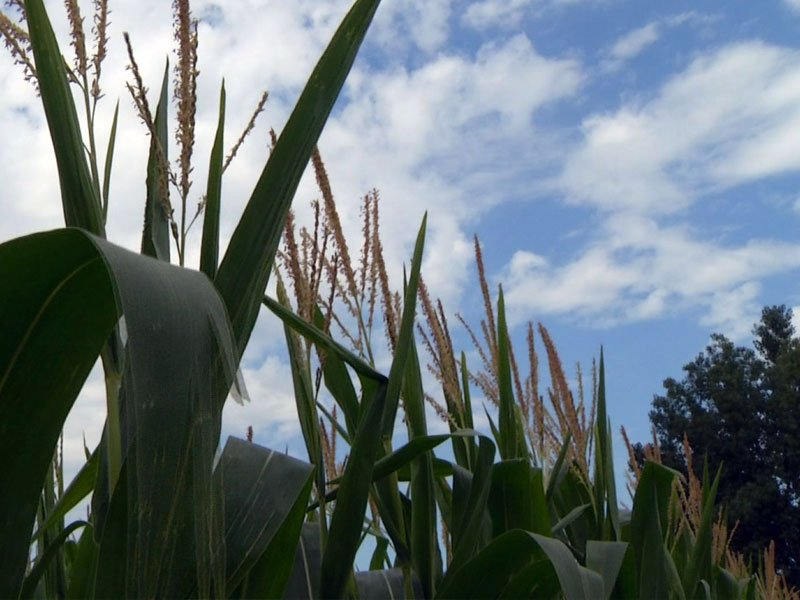 weather august outlook crops ag farm