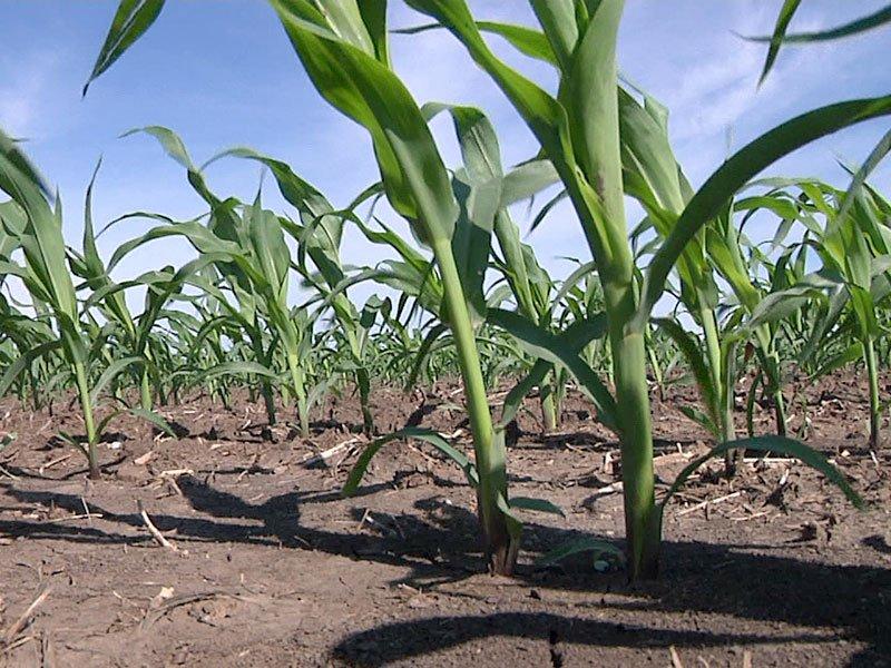 rain crops spring corn generic